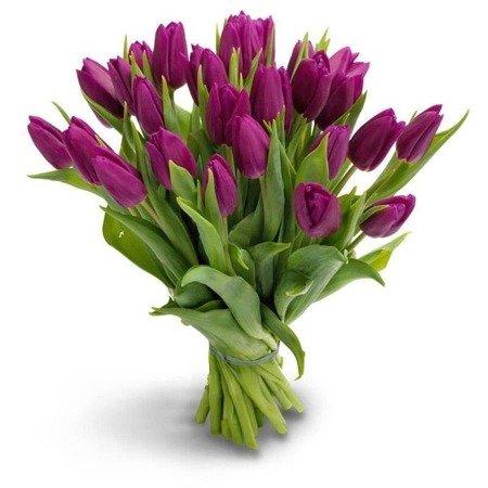 Bukiet 25 fioletowych tulipanów